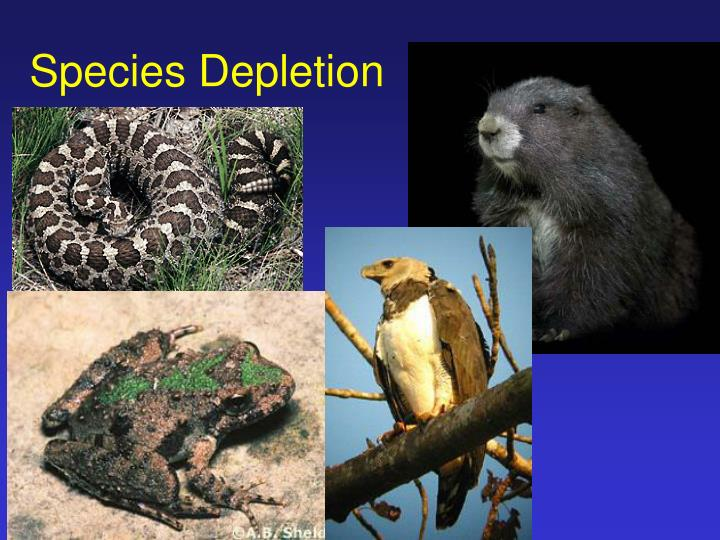 species depletion n.