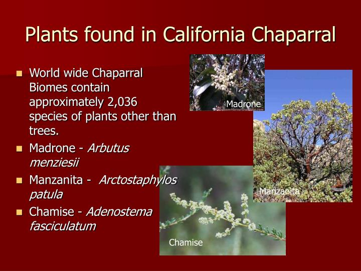 Plants found in California Chaparral