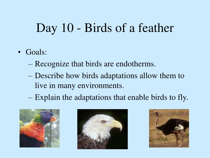 Day 10 - Birds of a feather