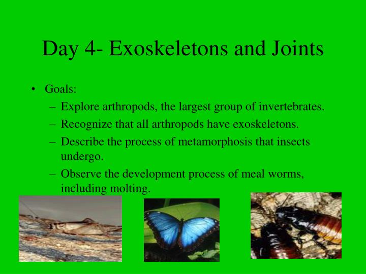 Day 4- Exoskeletons and Joints