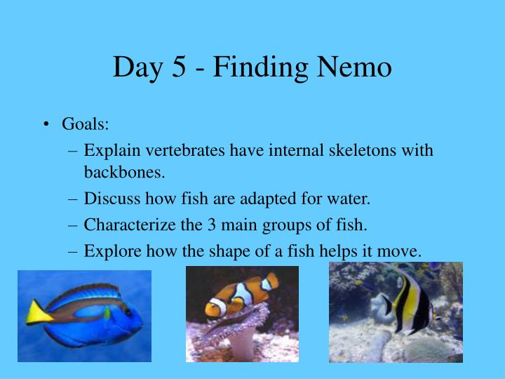 Day 5 - Finding Nemo