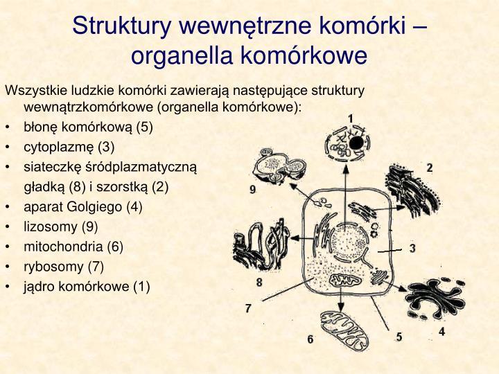 Struktury wewnętrzne komórki – organella komórkowe