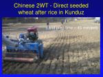 chinese 2wt direct seeded wheat after rice in kunduz