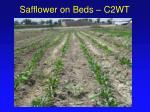 safflower on beds c2wt