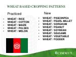 wheat based cropping patterns