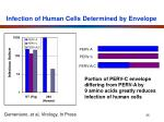 infection of human cells determined by envelope