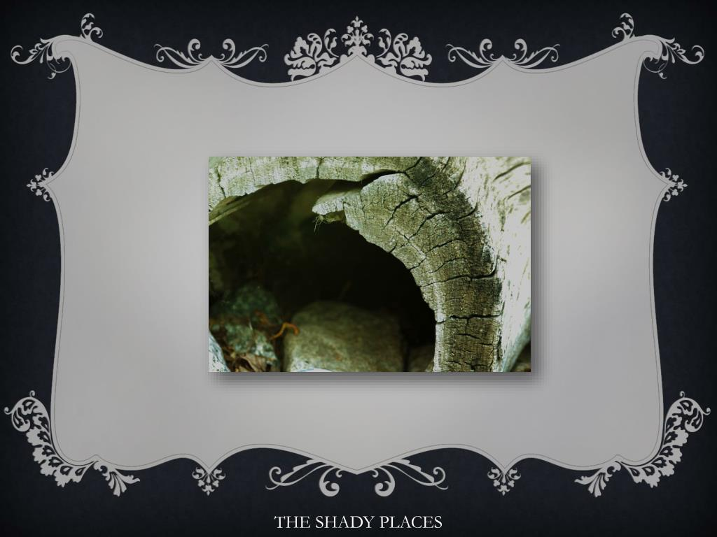 THE SHADY PLACES