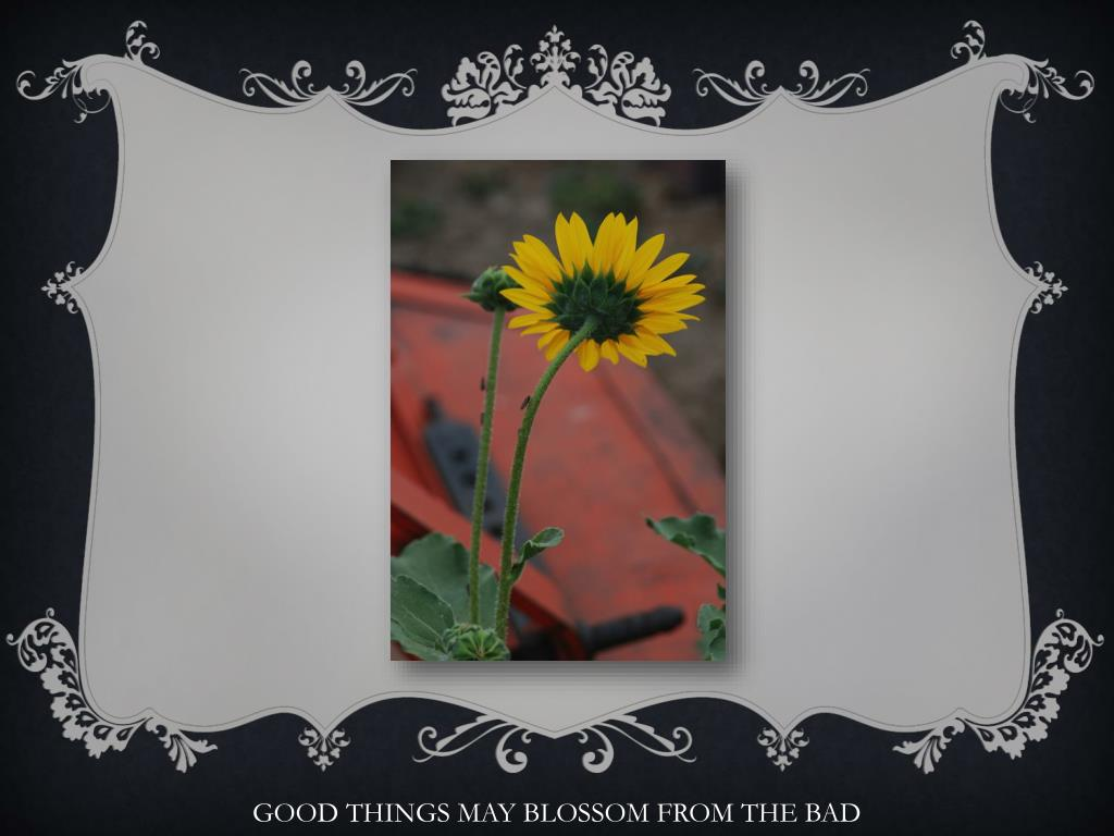 GOOD THINGS MAY BLOSSOM FROM THE BAD
