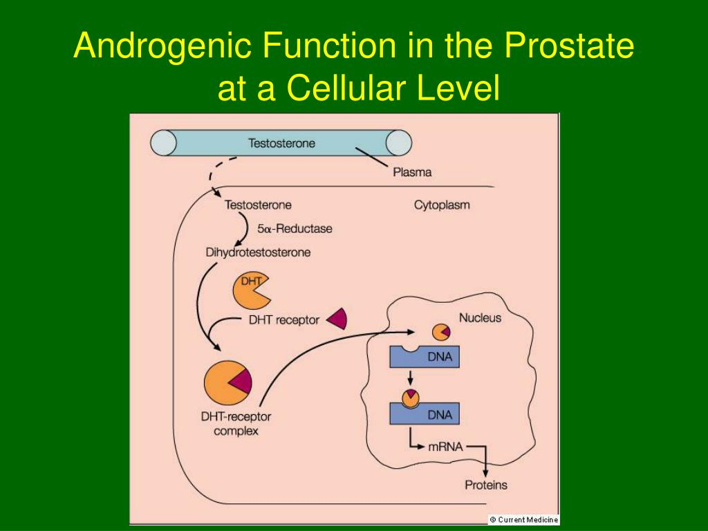 Androgenic Function in the Prostate