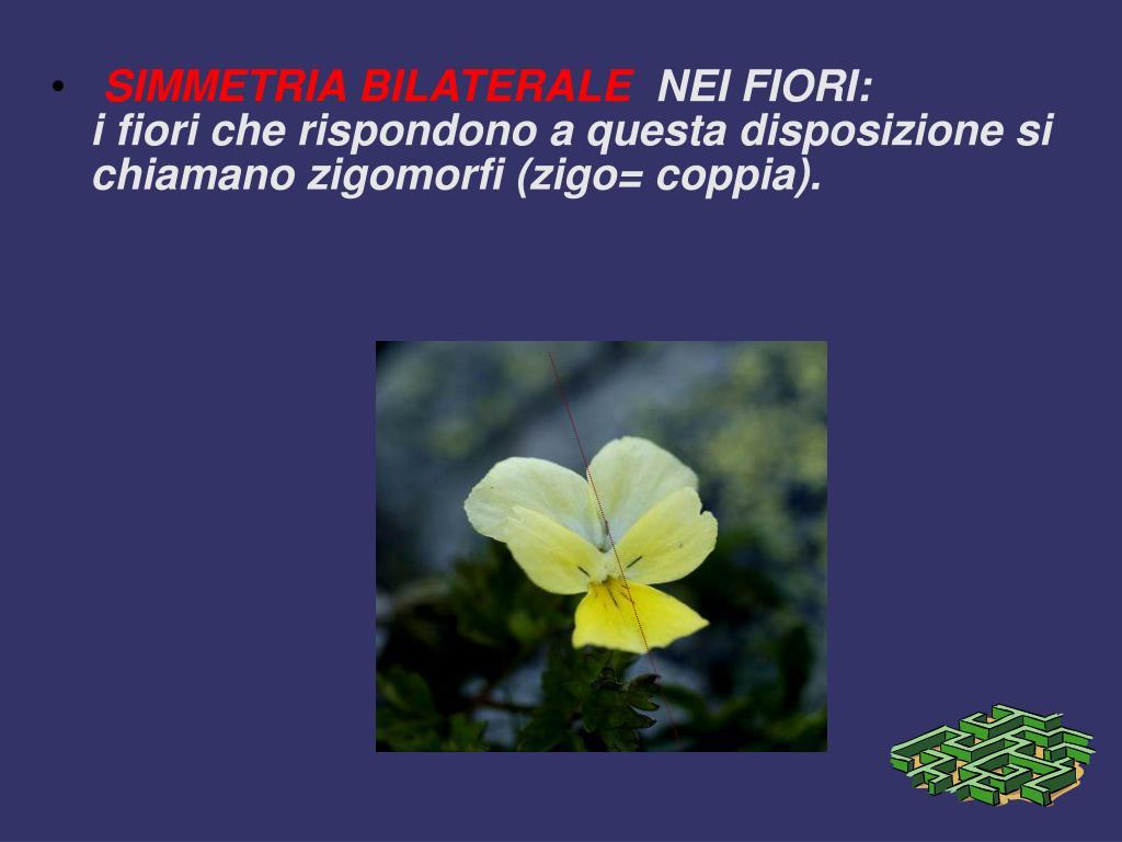 Fiori Zigomorfi.Ppt Simmetria Powerpoint Presentation Free Download Id 494036