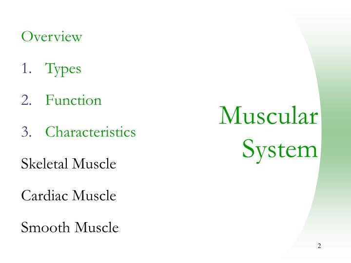 PPT - Muscular System PowerPoint Presentation - ID:494419