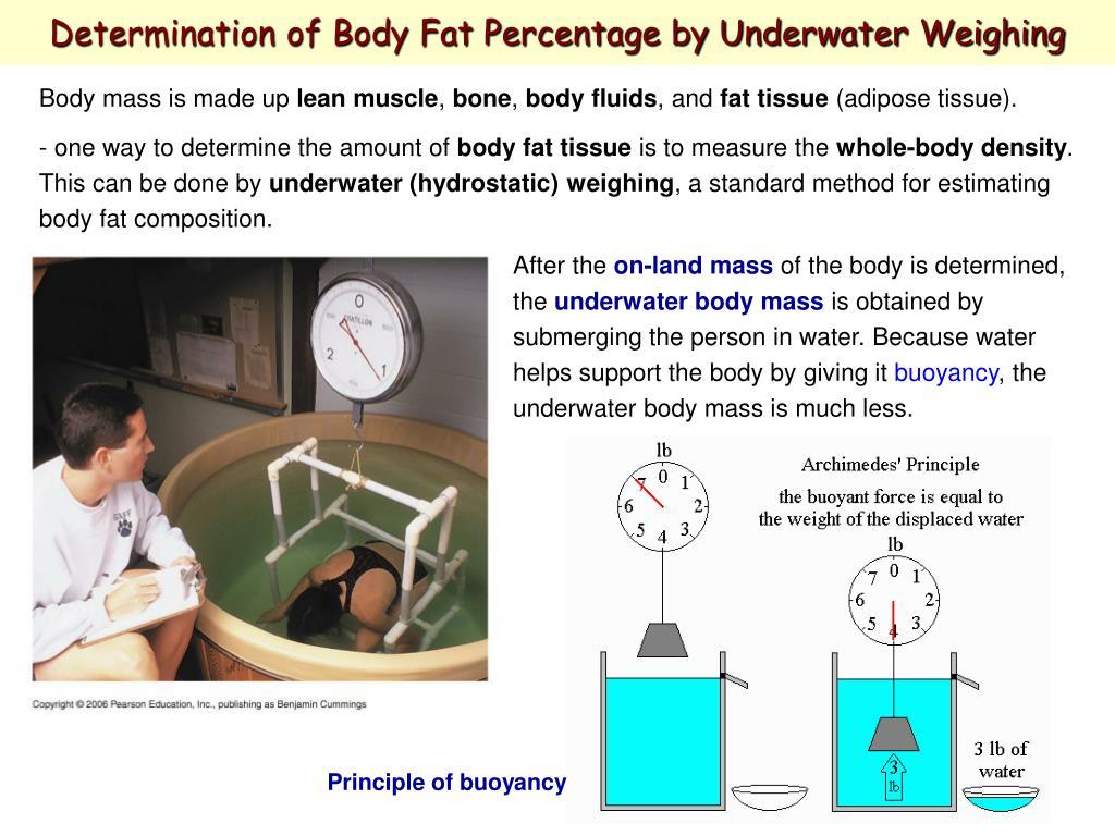 Determination of Body Fat Percentage by Underwater Weighing