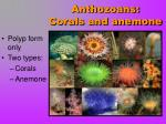 anthozoans corals and anemone
