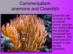 commensalism anemone and clownfish