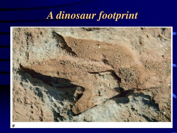 A dinosaur footprint