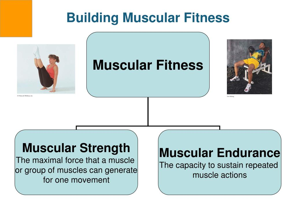 Building Muscular Fitness