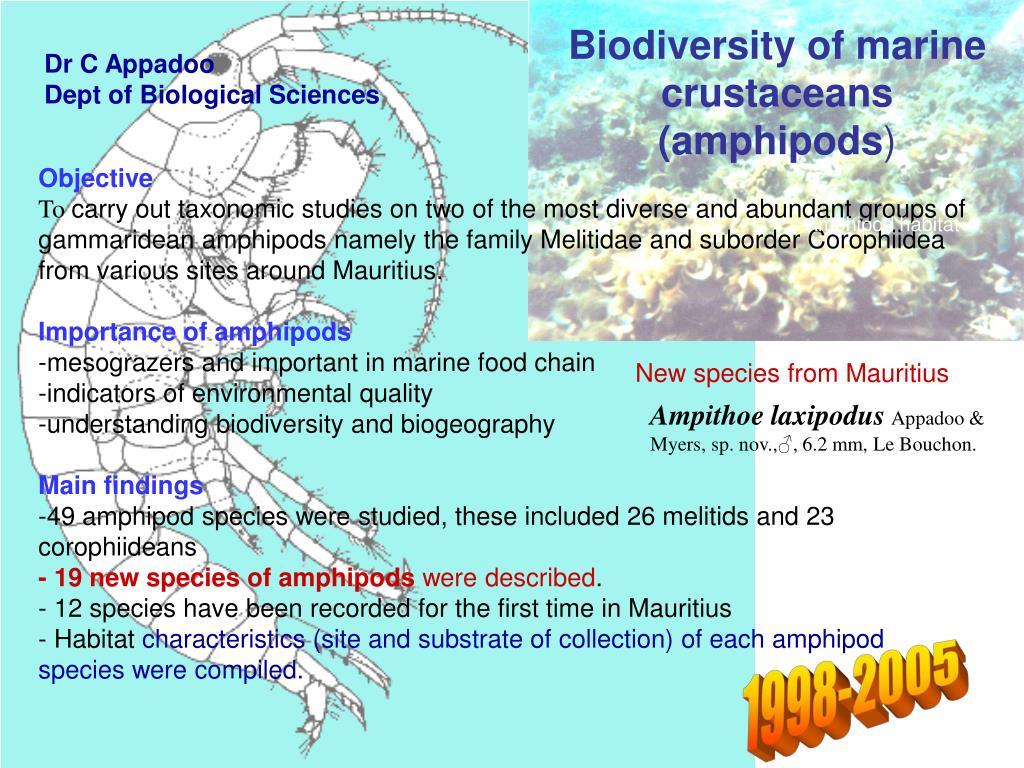 Biodiversity of marine crustaceans (amphipods