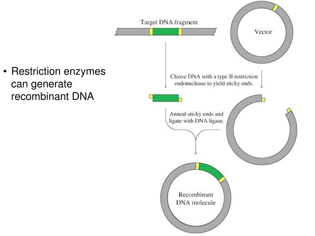 chapter 9 dna based information technologies Chapter 8 a recombinant dna sweeping regulation on so-called recombinant dna, technologies which recombine dna selected based on the dna region you.