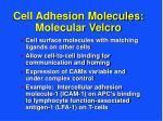 cell adhesion molecules molecular velcro