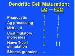 dendritic cell maturation lc fdc