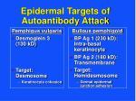 epidermal targets of autoantibody attack