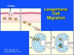 langerhans cell migration
