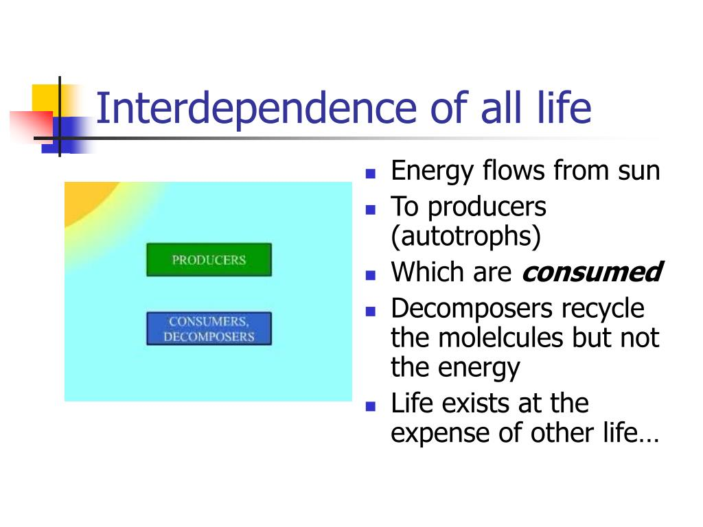 Interdependence of all life