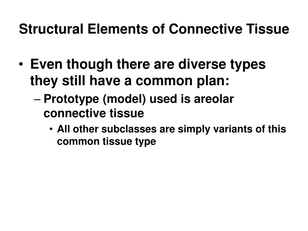 Structural Elements of Connective Tissue