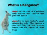 what is a kangaroo6