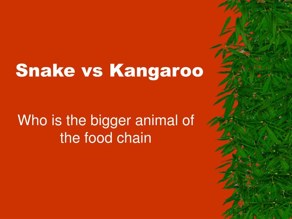 snake vs kangaroo l.