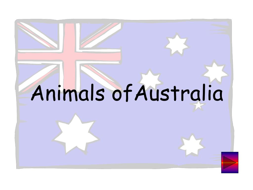 animals ofaustralia l.