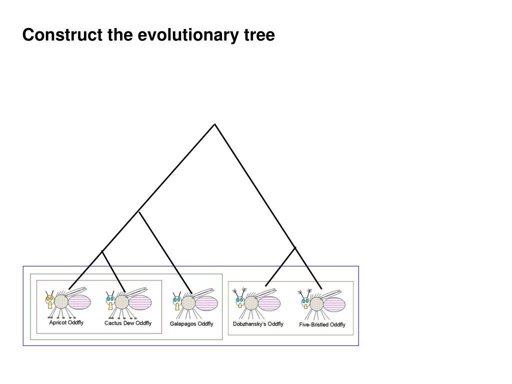 Construct the evolutionary tree