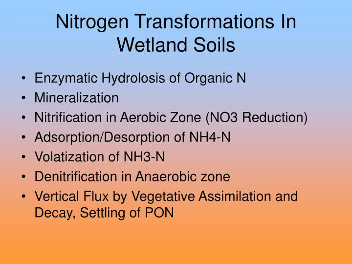 Nitrogen Transformations In Wetland Soils
