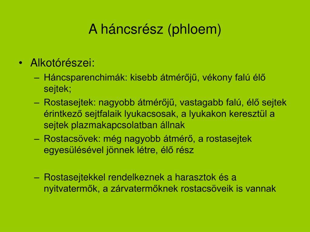 A háncsrész (phloem)