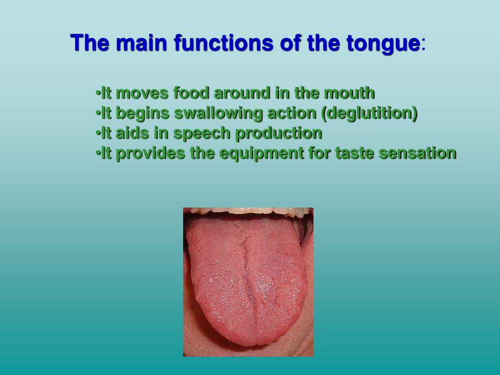 The main functions of the tongue