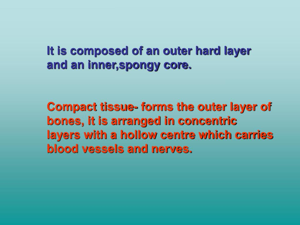 It is composed of an outer hard layer and an inner,spongy core.
