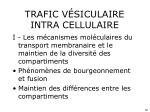 trafic v siculaire intra cellulaire2