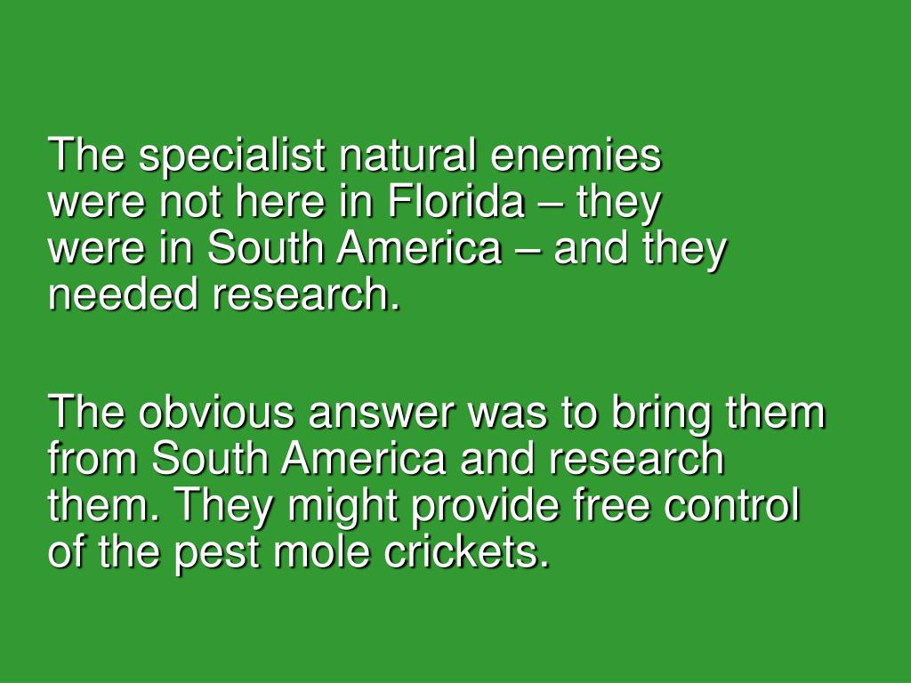 The specialist natural enemies were not here in Florida – they were in South America – and they needed research.