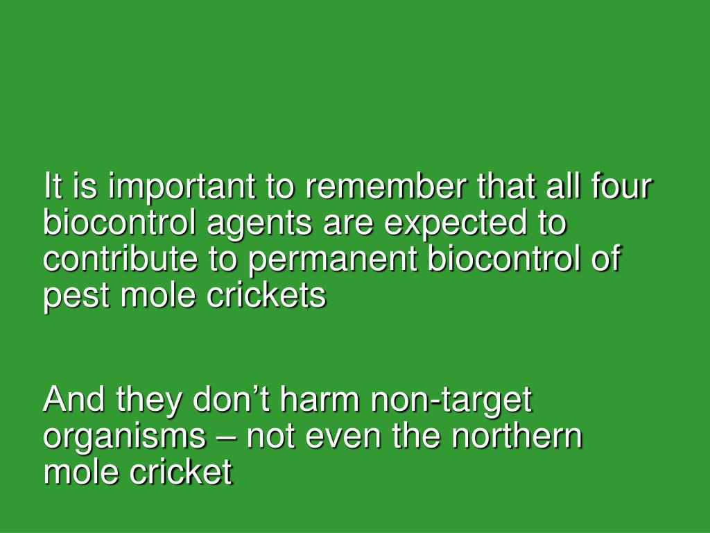 It is important to remember that all four biocontrol agents are expected to contribute to permanent biocontrol of pest mole crickets