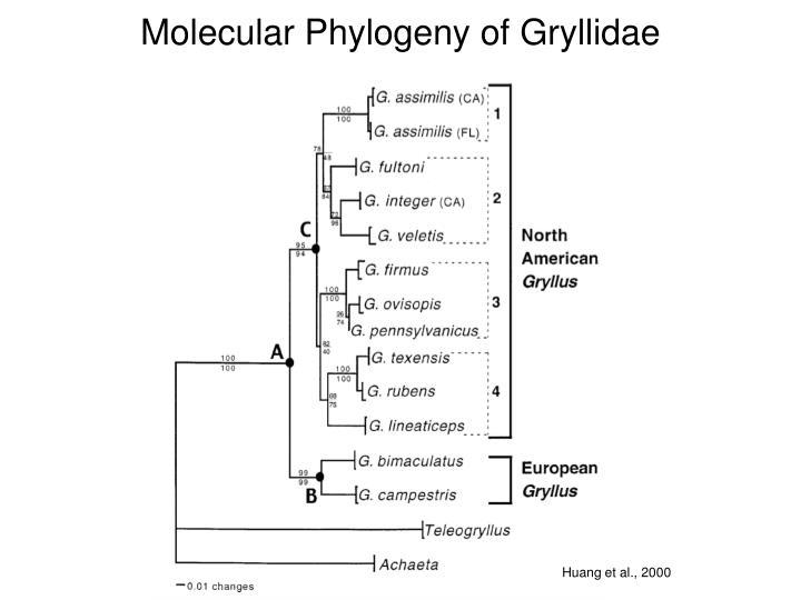Molecular phylogeny of gryllidae