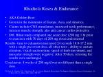 rhodiola rosea endurance