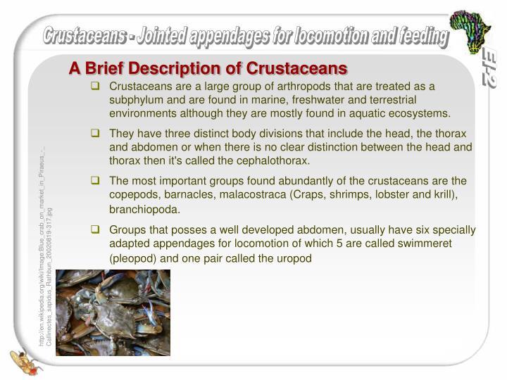 A brief description of crustaceans