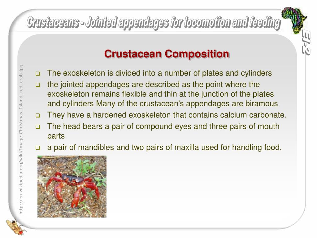 Crustacean Composition