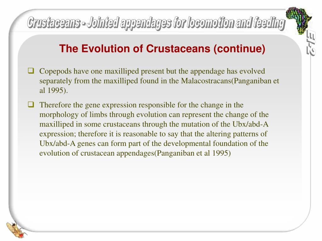 The Evolution of Crustaceans (continue)