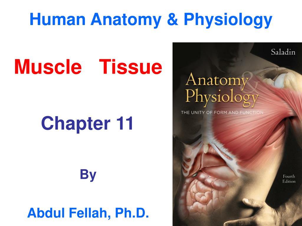 PPT - Human Anatomy & Physiology PowerPoint Presentation - ID:506947