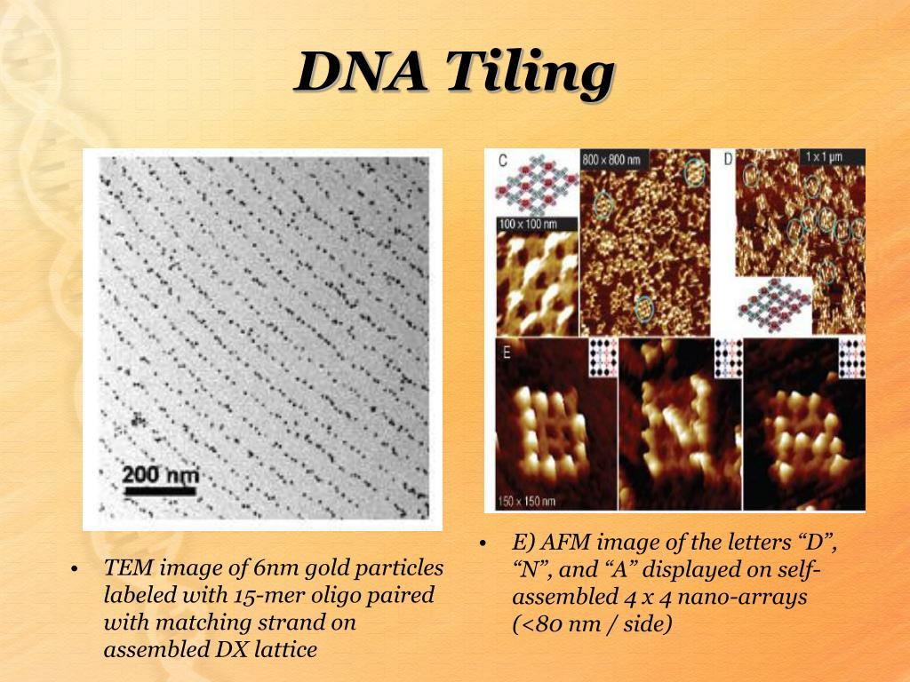 DNA Tiling