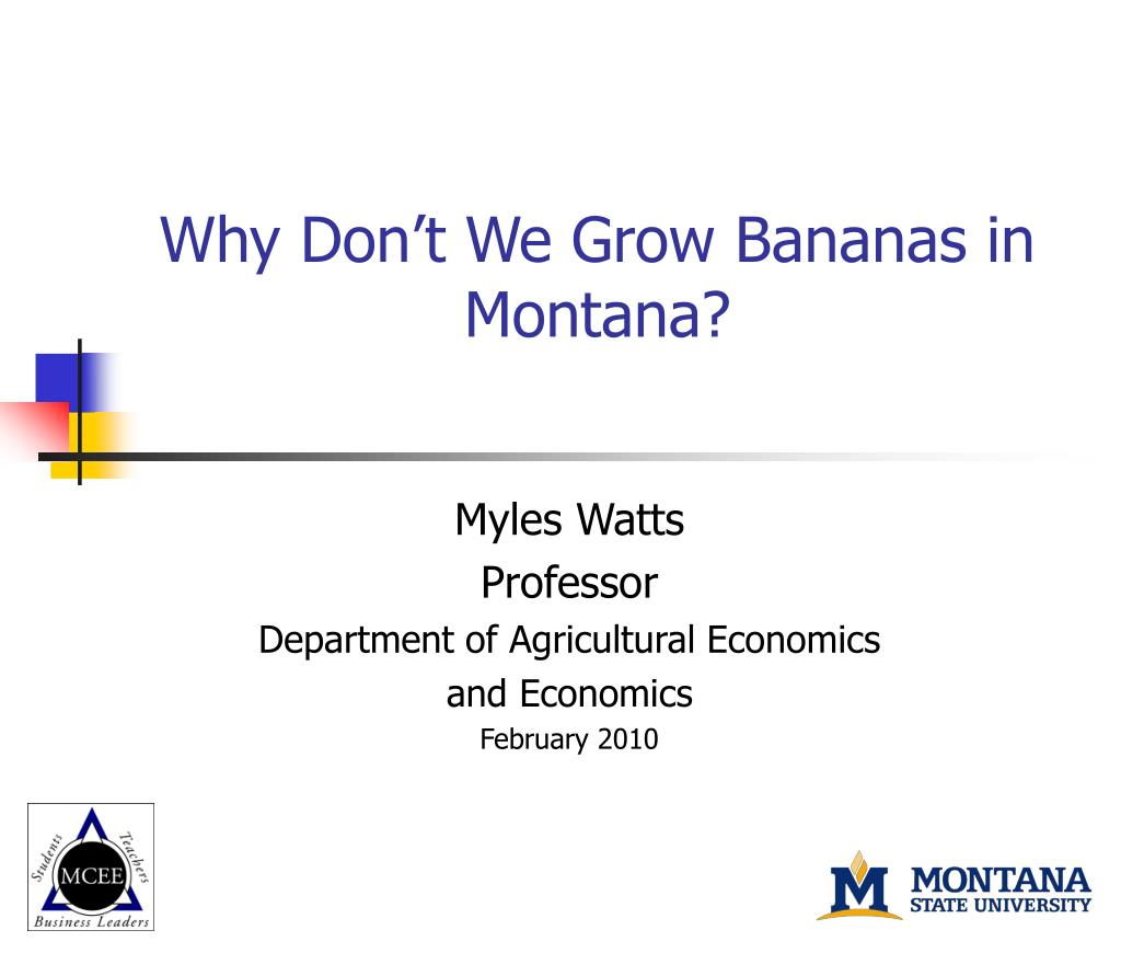 why don t we grow bananas in montana l.