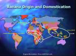 banana origin and domestication