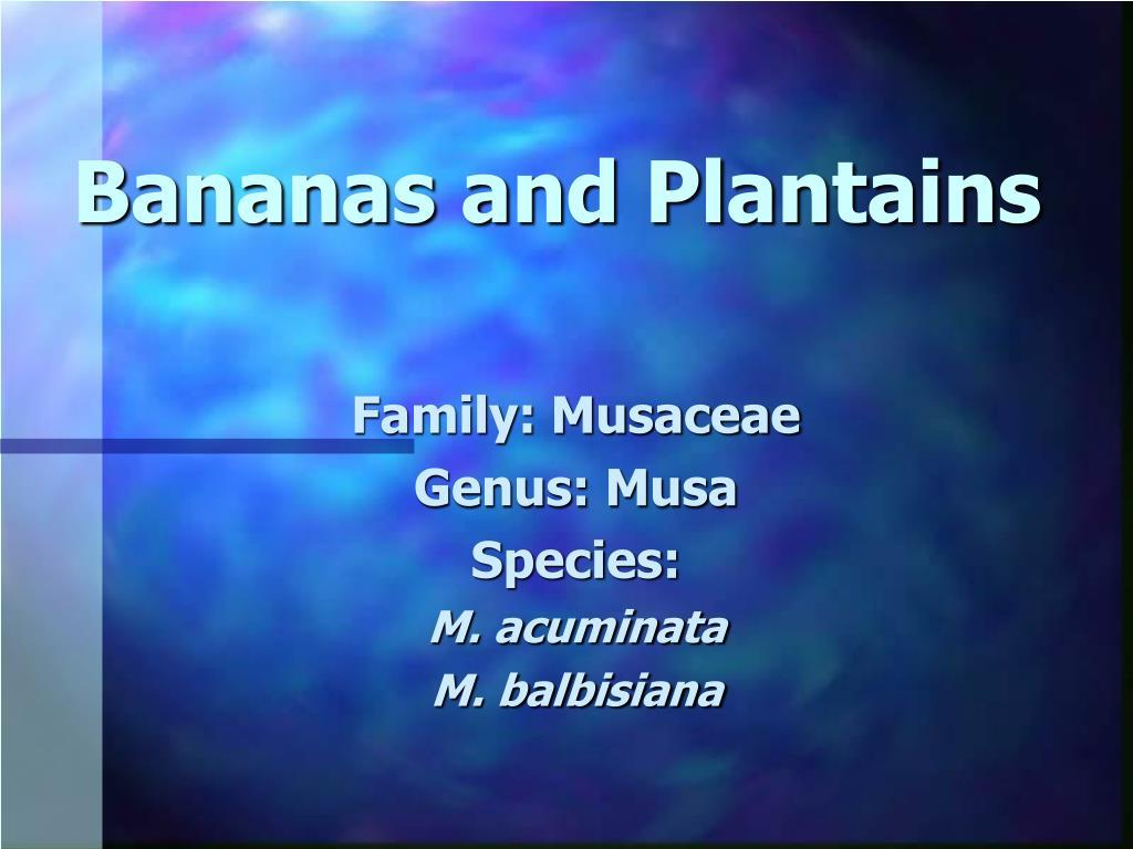bananas and plantains l.