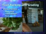 fruit packing and grading38